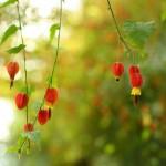 cvety-priroda-fon-lovejusta_ru